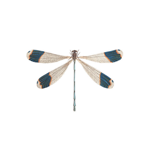 Dragonfly, Insect, Animal, Tender, Isolated, Vintage