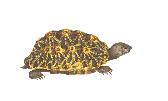 Turtle, Animal, Reptile, Vintage, Isolated, Png