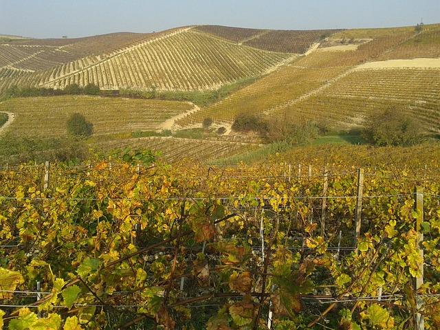 Vineyards, Wine, Monferrato, Langhe, Piemonte, Vintage