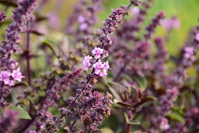 Mint, Minzblüte, Summer, Flower, Close, Purple, Viola