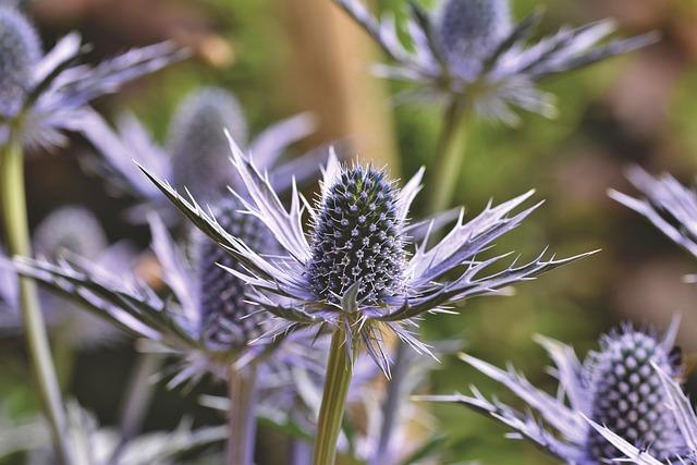 Thistle, Blue Thistle, Bee, Blue, Violet, Spur, Nature