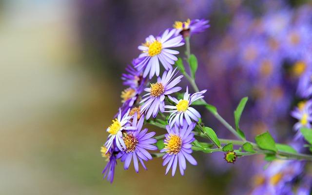 Flower, Flowers, Violet