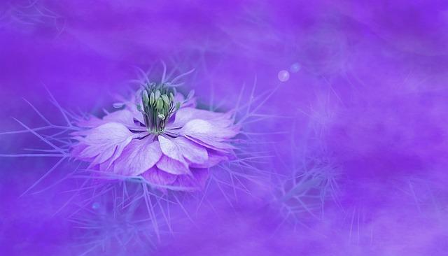 Flower, Nature, Background, Color, Floral, Violet