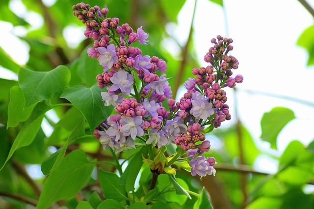 Without, Bush, Spring, Violet, Flowering, Green, Nature