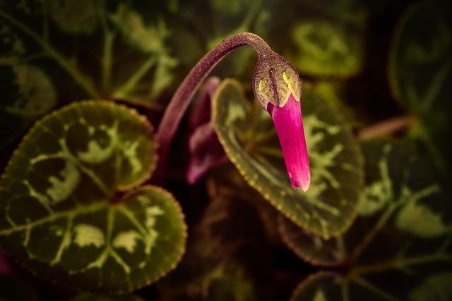 Violet, Flower, Blossom, Bloom, Nature, Plant