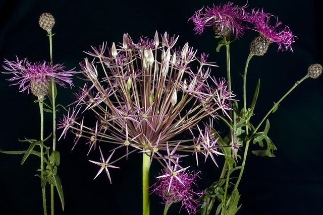 Flowers, Ornamental Onion, Violet, Nature, Plant