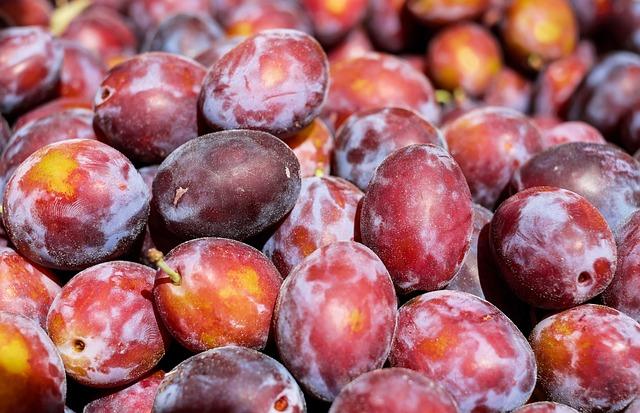 Plum, Fruit, Fruits, Violet Purple, Harvest