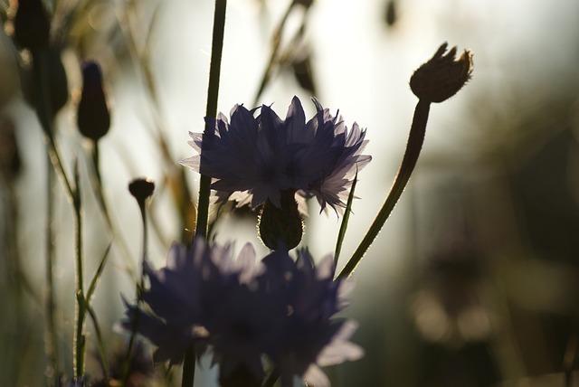 Nature, Plant, Virgin In The Green, Back Light, Blossom