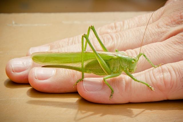 Tettigonia Viridissima, Viridissima, Skip, Grasshopper