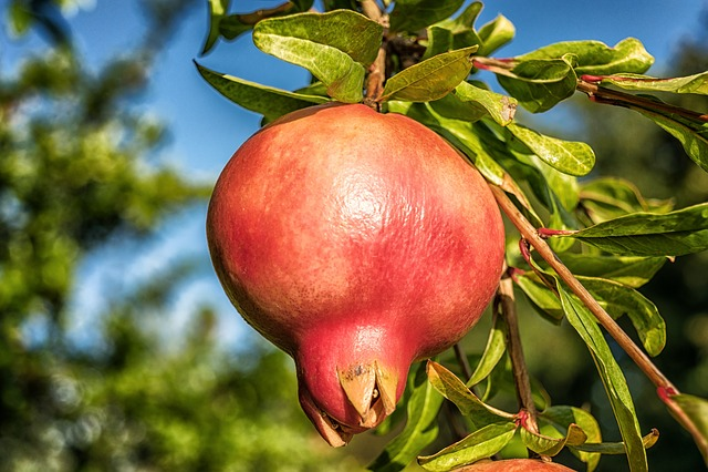 Pomegranate, Fruit, Punica Granatum, Vitamins, Exotic