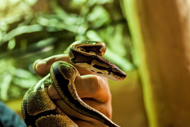 Cobra, Snake, Reptile, Strangler, Vivarium, Animal