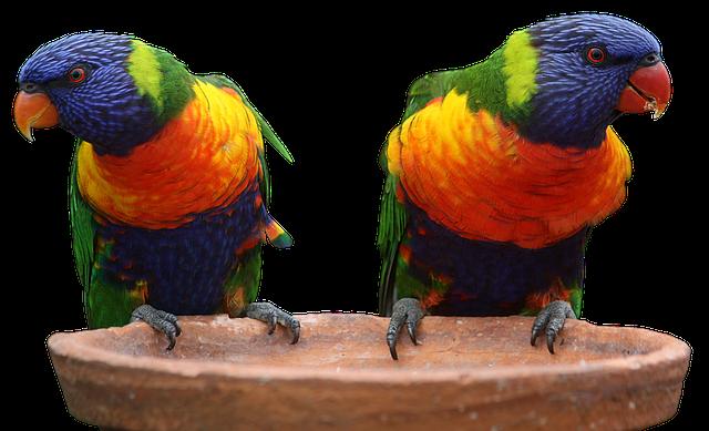 Parrot, Bird, Bill, Animal World, Color, Vogelartig