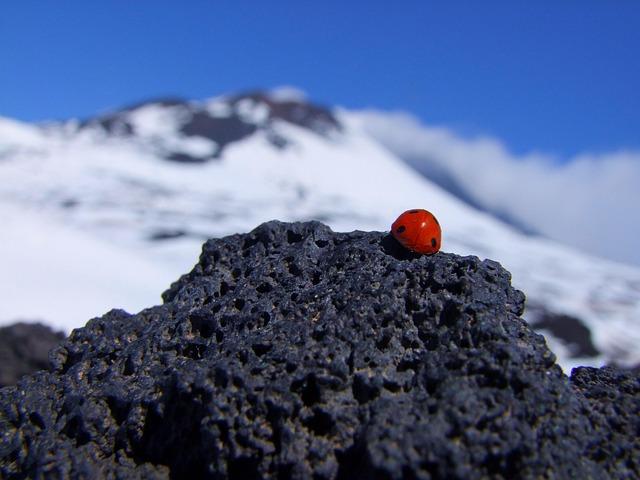 Ladybird, Etna, Italy, Mountain, Rock, Sun, Volcano
