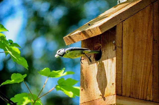 Birdhouse, Aviary, Volery, Great Tit, Tit, Bird, Tiny
