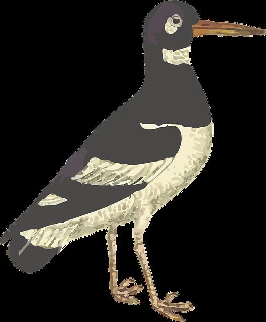 Animal, Bird, Wader, Wading