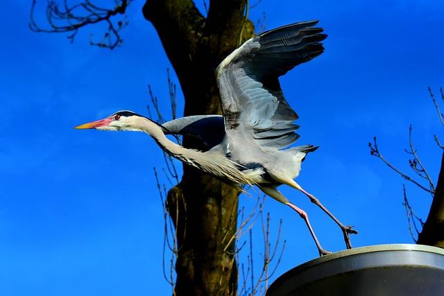 Heron, Wading Bird, Animal, Wing, Head, Leg, Beak