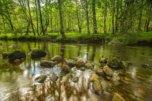 River, Stones, Trees, Wales, England
