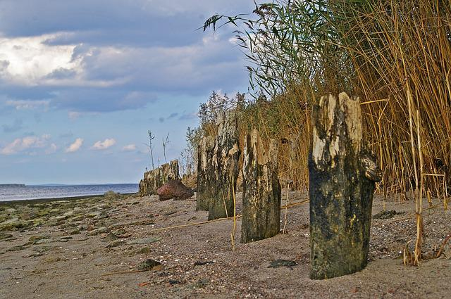 Walk On The Beach, Low Tide, Beach, Reed, Water, Nature