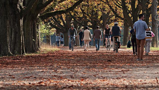 Walk, Tree Lined Avenue, Nature, Away, Avenue, Trees