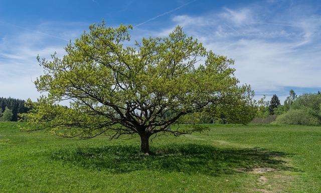 Tauchenweiler, Walker Meadows, Tree, Summer, Meadow