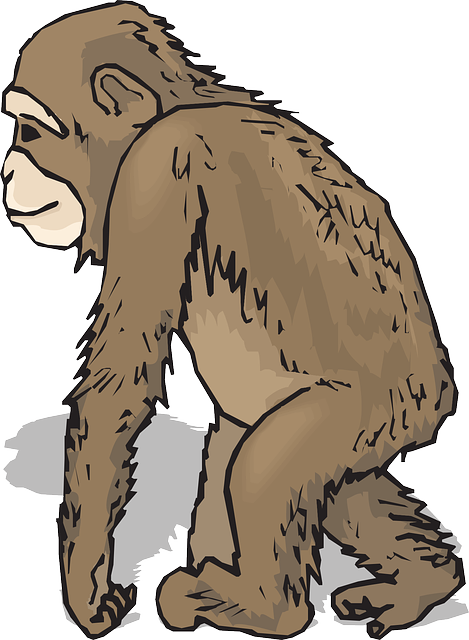 Feet, Hands, Leaning, Walking, Animal, Chimp, Fur, Hand