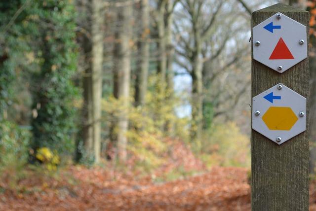 Walk, Walking Path, Arrows, Direction, Trees, Hiking