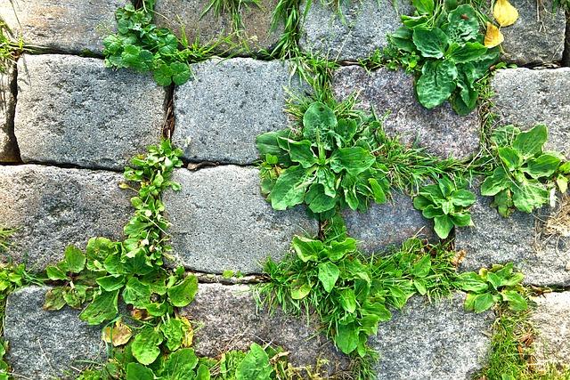 Stone, Cobble, Cobblestone, Footpath, Path, Walkway