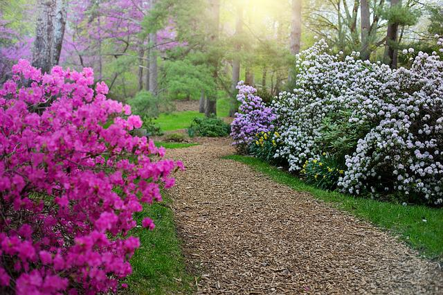 Spring, Rhododendrons, Path, Walkway, Walk, Pink
