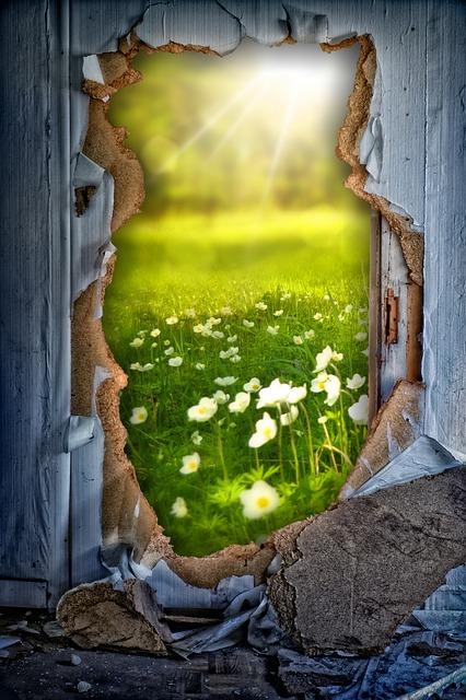 Wall, Hole, Meadow, Flowers, Summer Meadow, Sun
