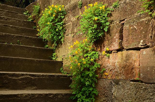 Stairs, Wall, Stone, Overgrown, Emergence