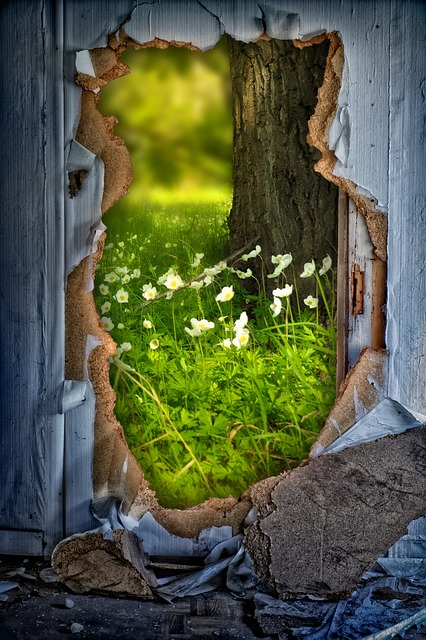 Wall, Hole, Meadow, Flowers, Tree, See Through