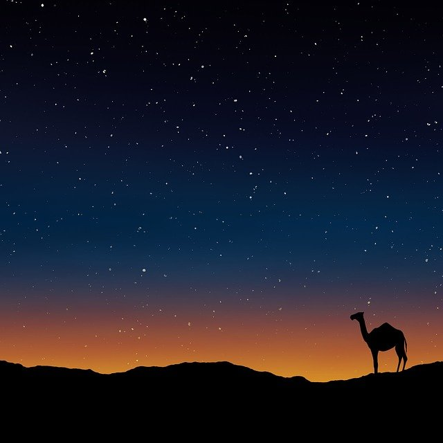 Camel, Oman, Egypt, Morocco, Wallpaper, Warm, Natural