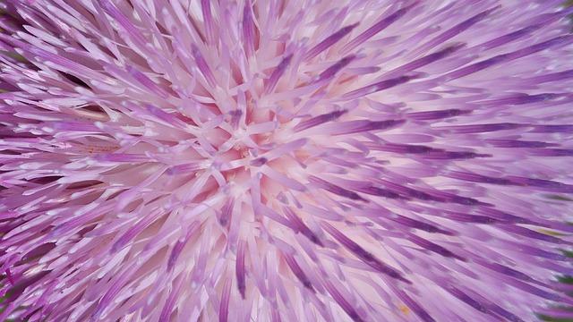 Wallpaper, Wall Paper, Cover Photo, Design, Purple