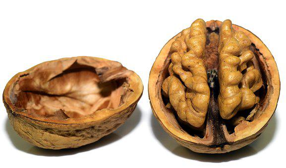 Walnut, Nut, Shell, Nutshell, Open, Brain, Head, Coils
