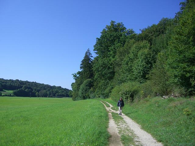 Away, Trail, Wanderer, Nature, Meadow, Forest