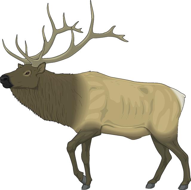 Elk, Animal, Wildlife, Wapiti, Mammal, Antlers, Stag