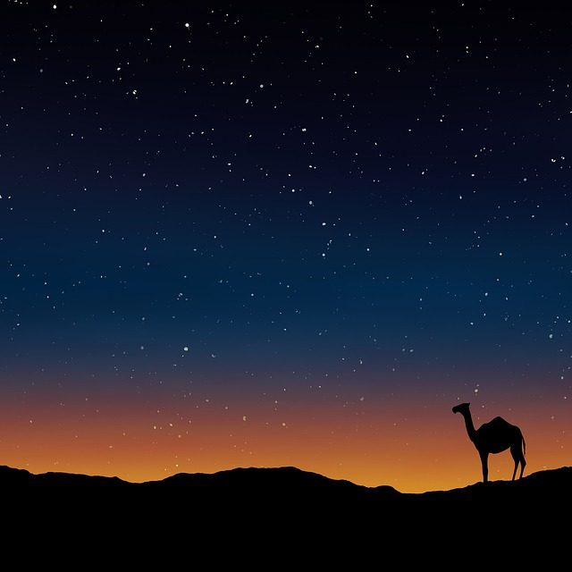 Camel, Oman, Egypt, Morocco, Wallpaper, Warm, Natural
