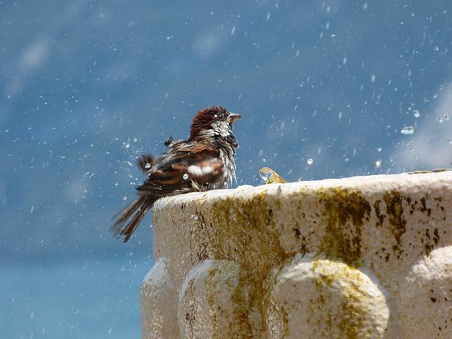 Bird, Wash, Fountain, Water, Clean