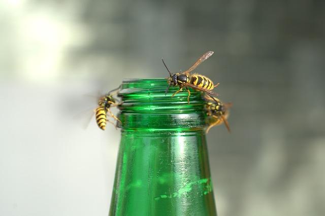 Wasps Plague, Wasp, Attack, Sting, Dangerous, Angry
