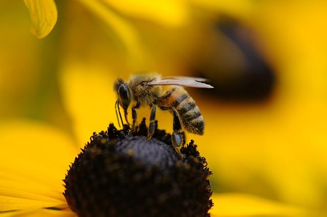 Bee, Wasp, Spring, Flower, Yellow, Hornet, Flora