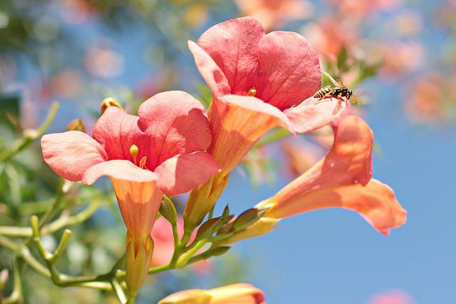 Wasp, Flower, Nature, Bug, Flowers