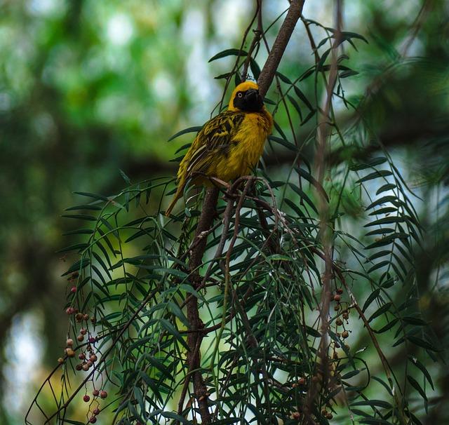 Bird, Africa, Safari, Wildlife, Watching, National
