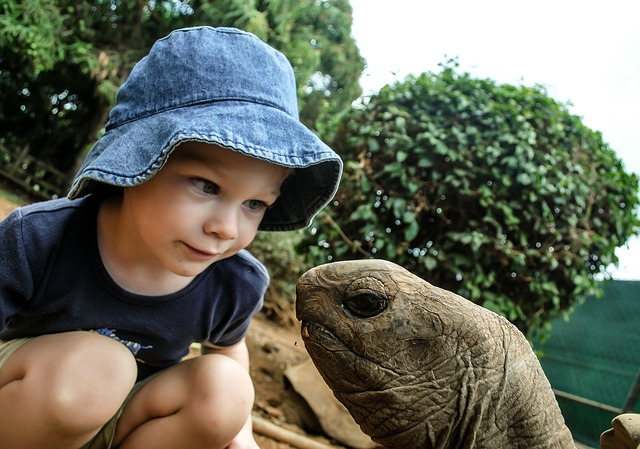 Boy, Turtle, Watching, Giant, Head, Beautiful, Cute