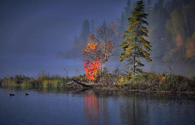 Autumn Landscape, Fall, Trees, Autumn Leaves, Water