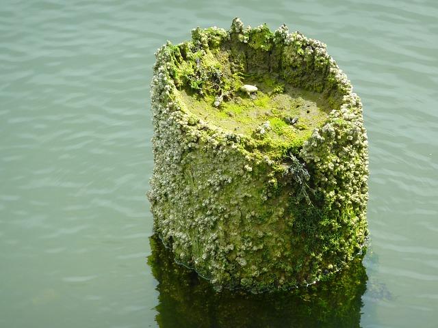Pier, Barnacles, Coast, Sea, Water, Old, Barnacle