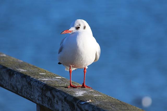 Seagull, Water Bird, Bird, Close, Seevogel, Port