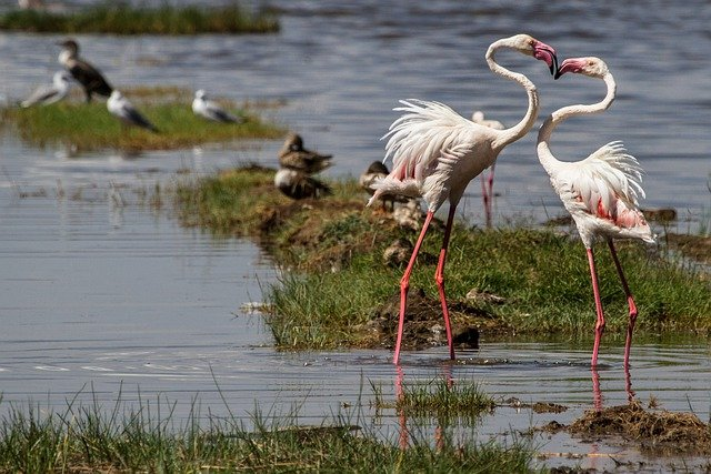 Flamingos, Birds, Water Bird, Animal World