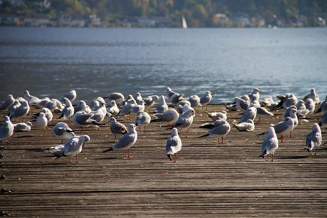 Bird, Seagull, Web, Water Bird, Seevogel, Nature