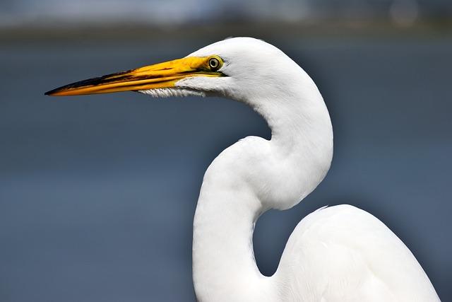 Bird, Wildlife, Water, Nature, Outdoors, Animal
