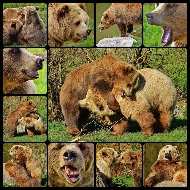 Bear, Wildpark Poing, Collage, Water, Brown Bear